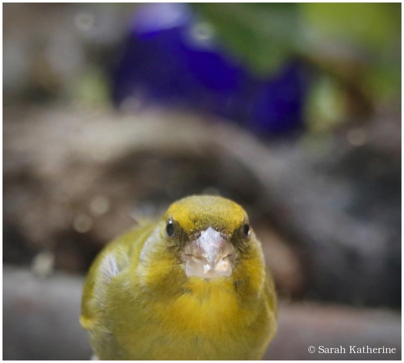 bird, eyes, see, window