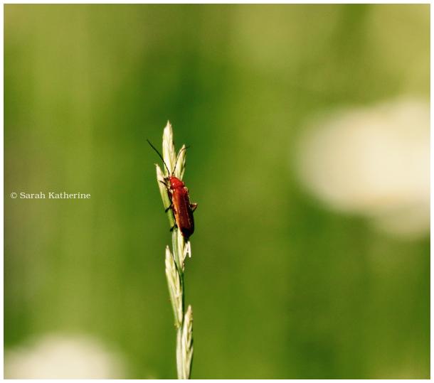 climb, bug, spire, top, grass, blade, garden, summ