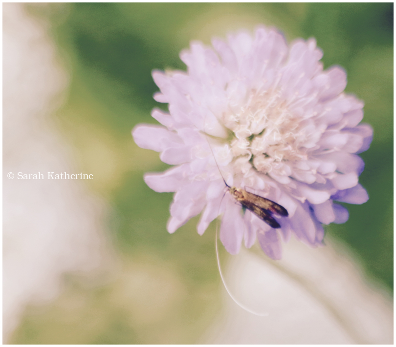 summer, wildflower, insect
