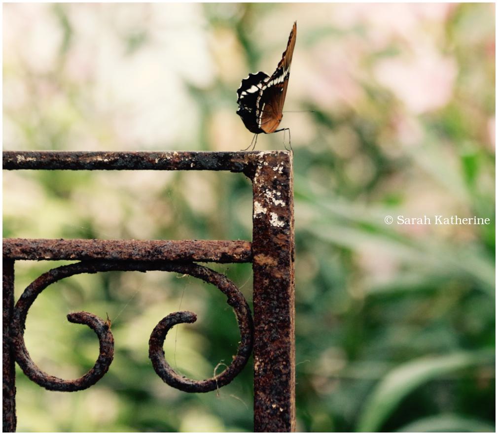 gate, butterfly