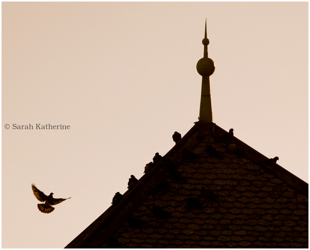 winged, bird, pigeon, light, chateau