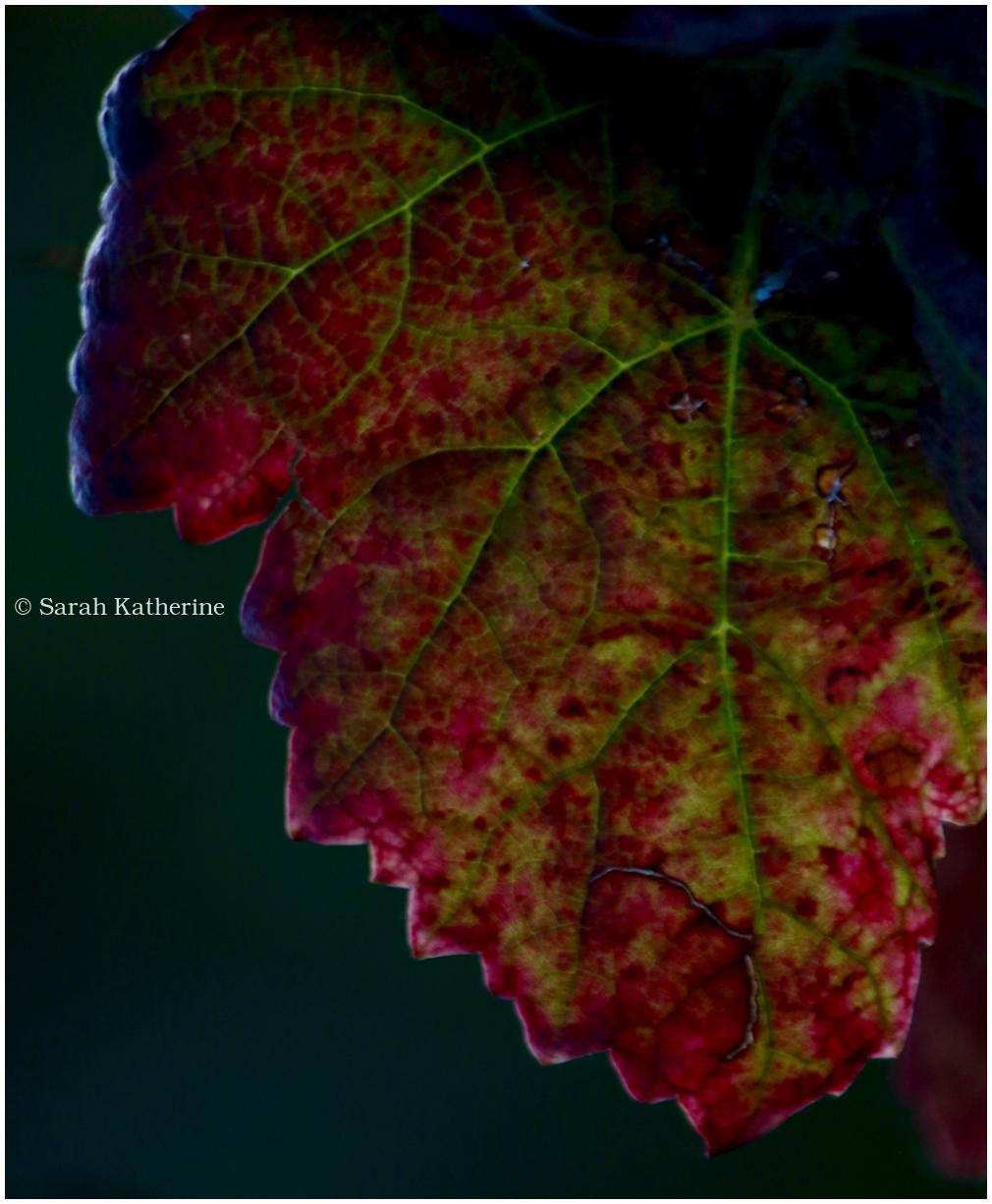 autumn, leaf, mood, colours