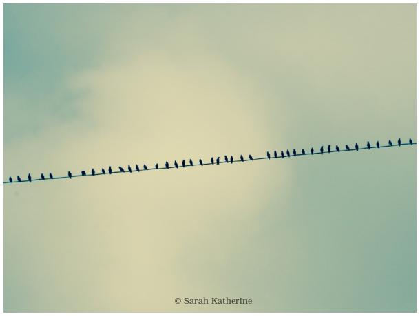 starlings, wire, line, autumn, bird, birds
