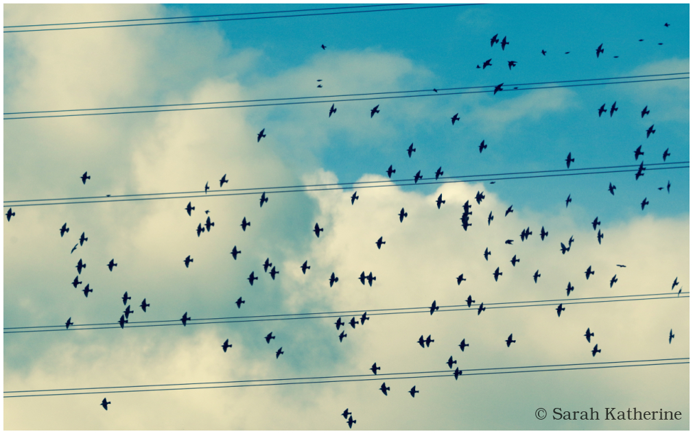 starlings. stars, autumn, sky, symphony