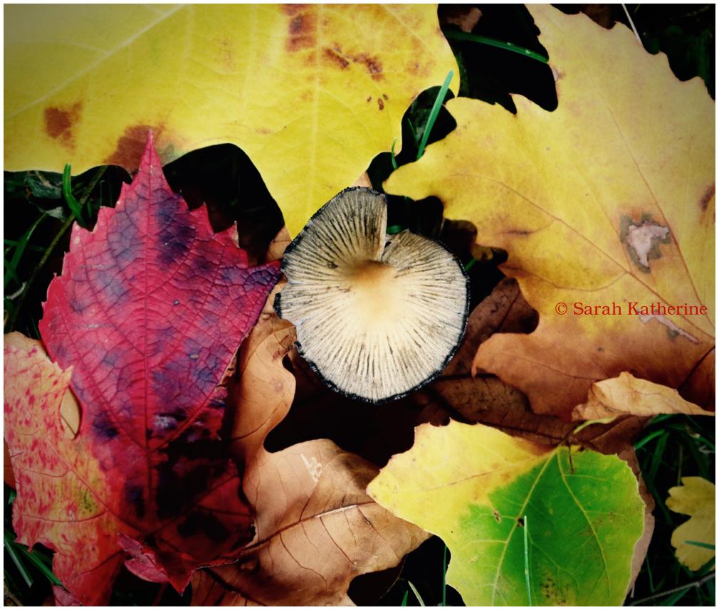 forest leaves mushroom autumn