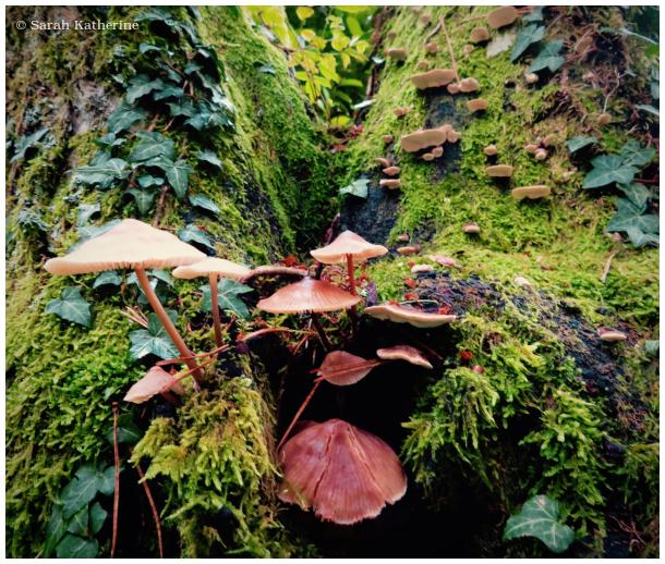 tree, mushroom, autumn