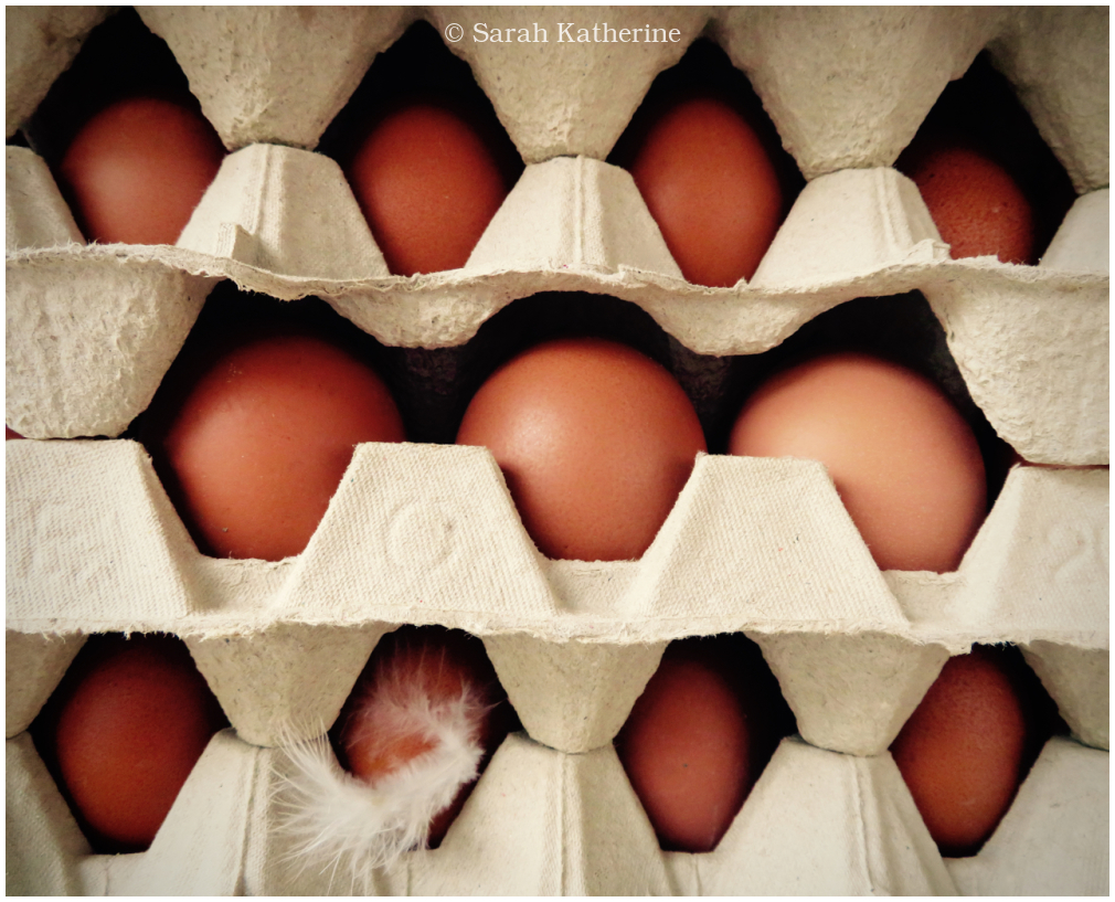 eggs, feather