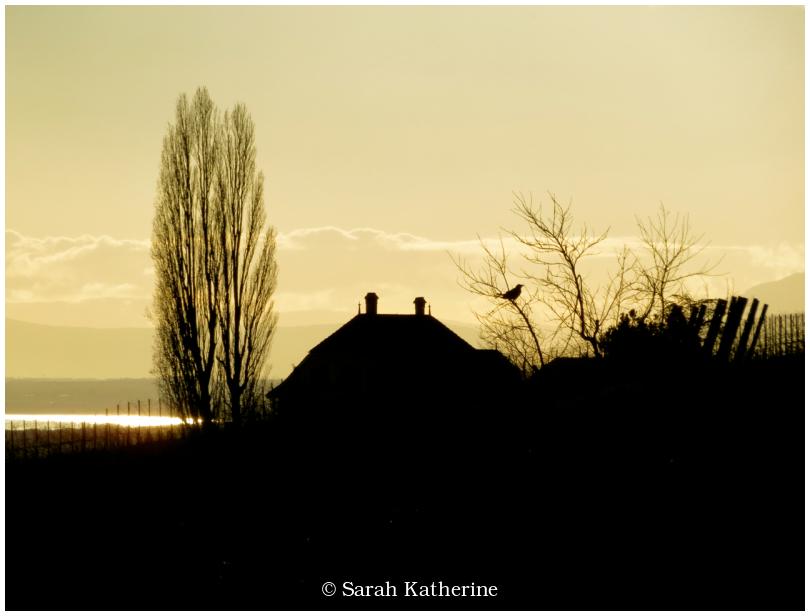 bird, sunset, tree