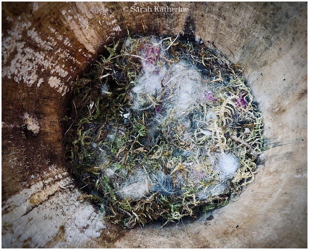 bird box, nest, spring