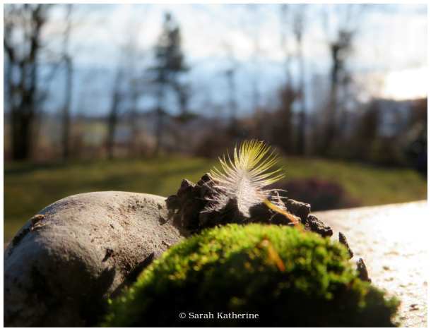 winter, feather, moss, stone, pine cone
