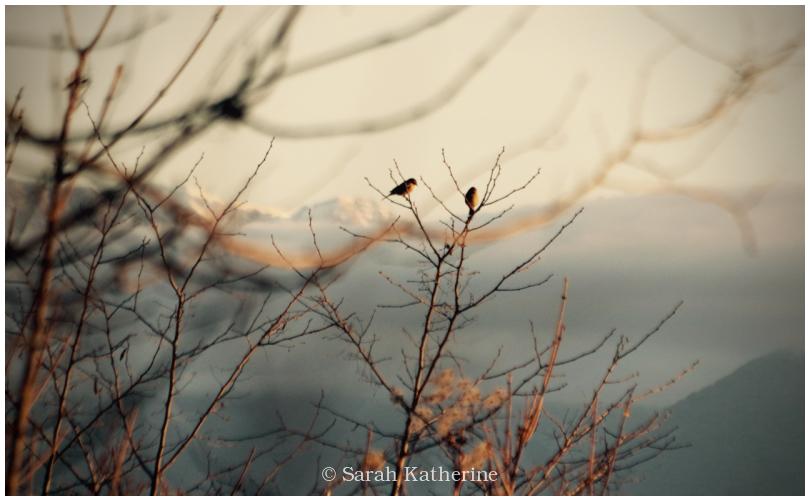 birds, branches, mountains, lake