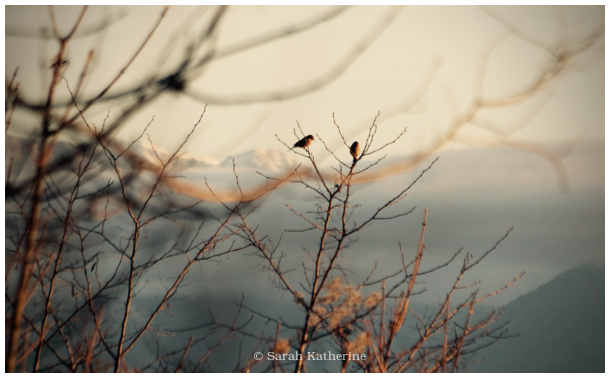 birds, branches, mountains, lake