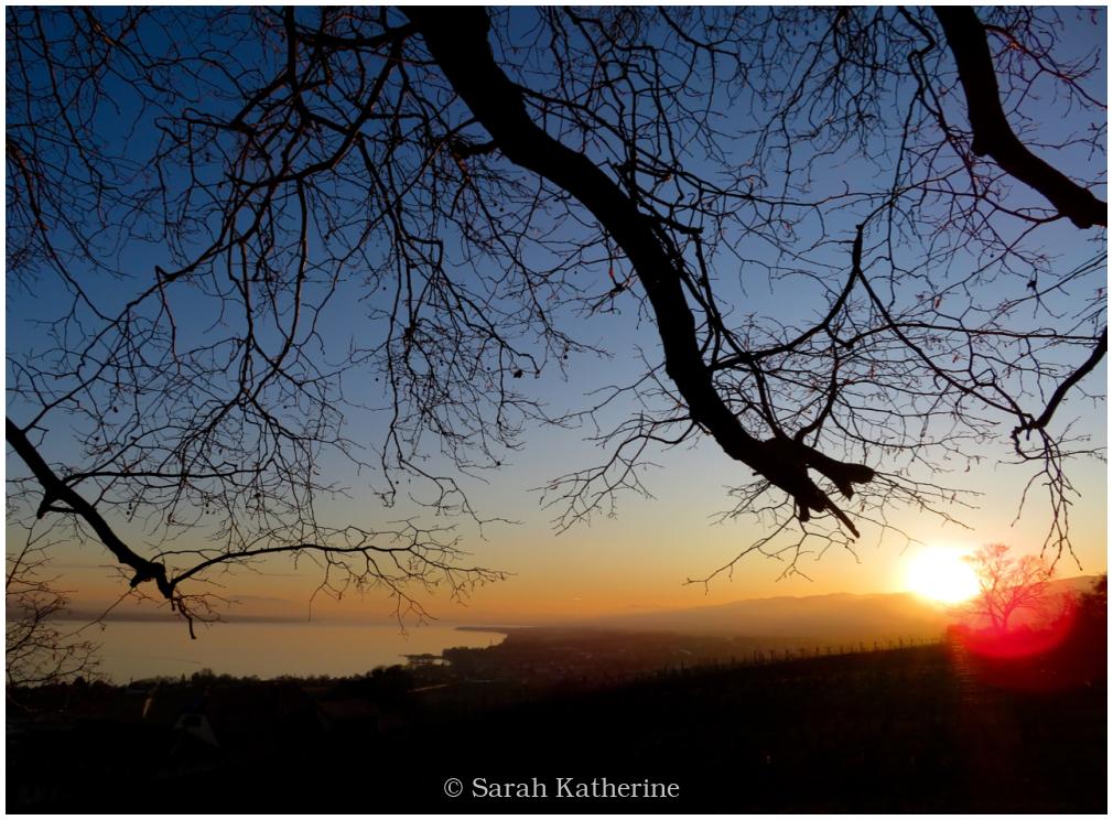 sunset, winter, lake, light, tree