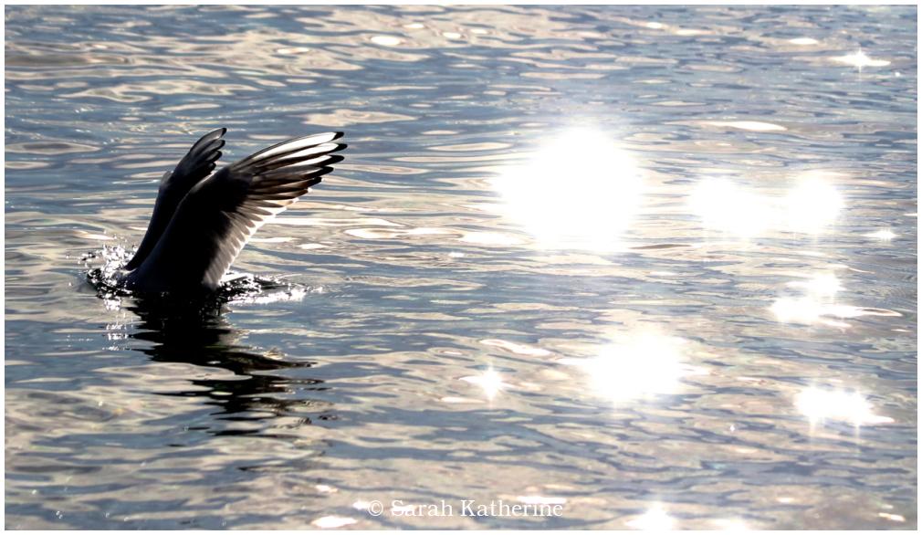lake, gull, wings, sunlight
