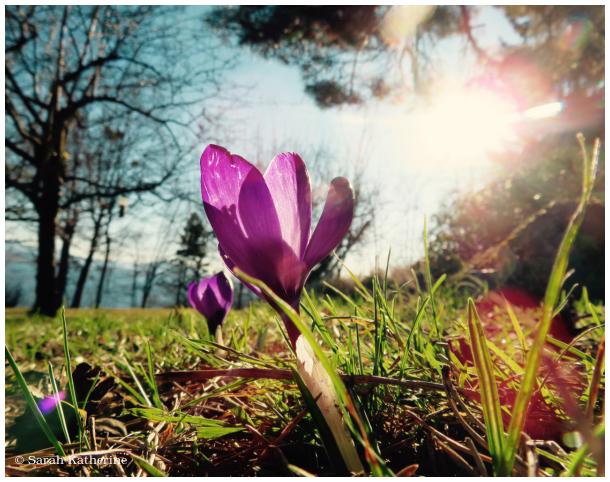 spring. equinox, sunlight, sun