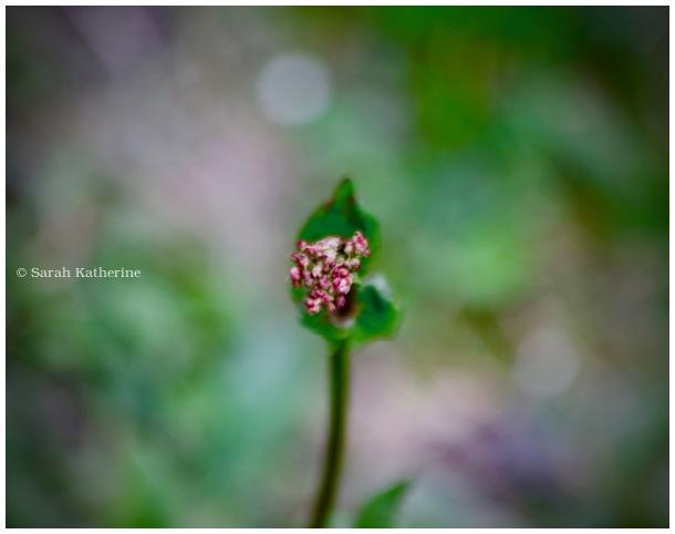spring, flower, prairie, garden