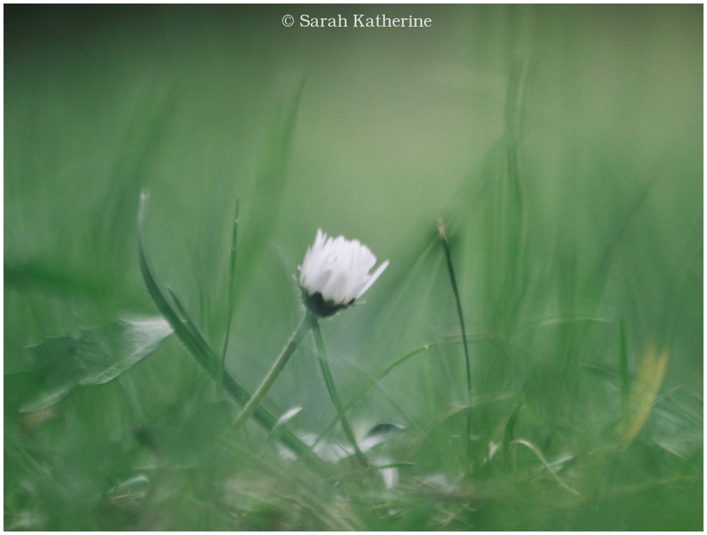 spring, grass, wildflower