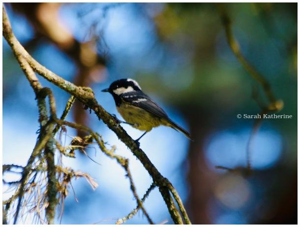 bird, spring, tree