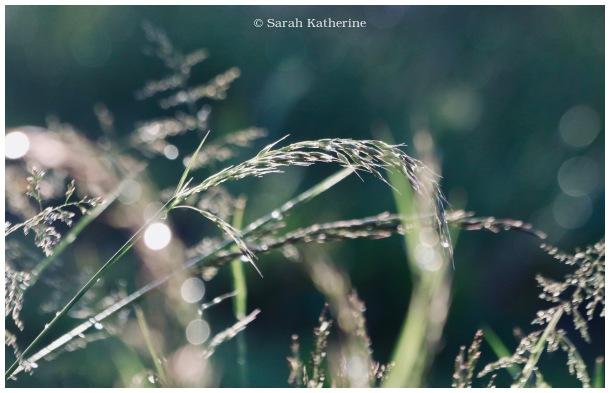 rain, spring, plant, sunlight