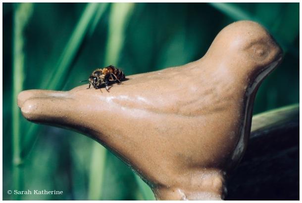 bee, bird, ceramic, spring