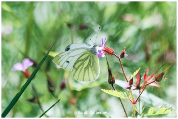 butterfly, wings, wildflowers, spring, garden