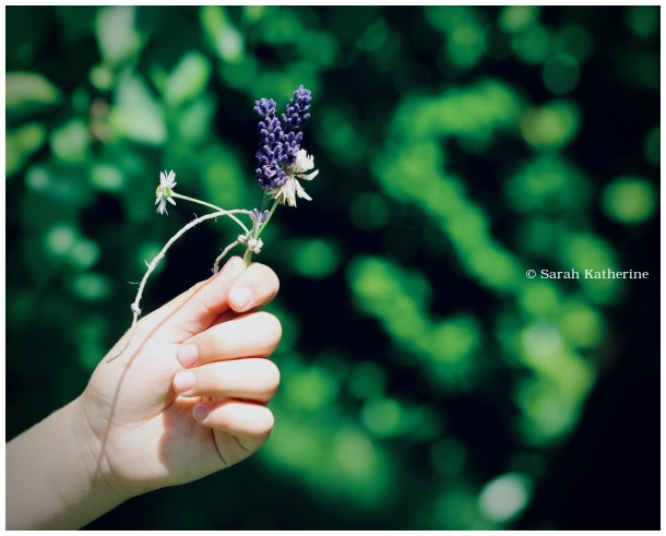 hand, boy, wildflowers