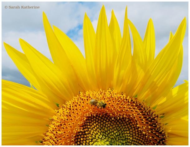 summer, petals, bee, summer