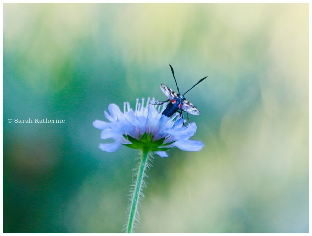 summer, garden, wildflowers, insect