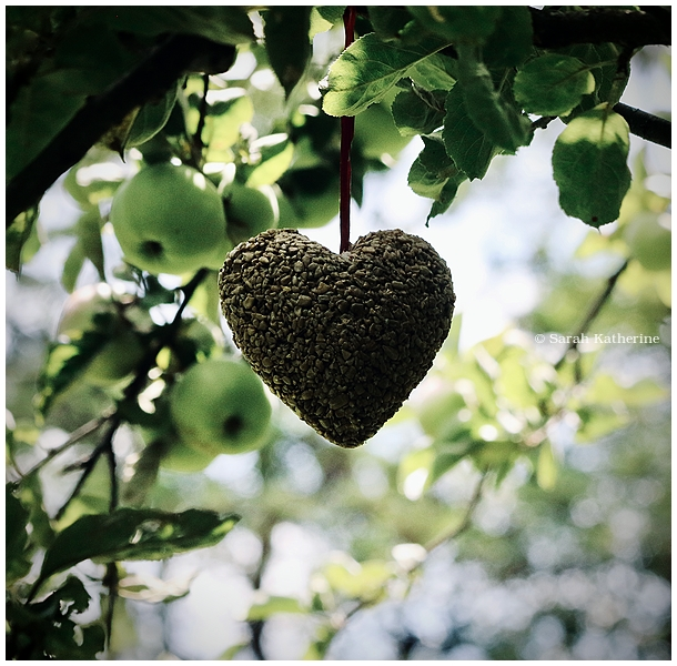 bird food sunflower seeds apple tree summer