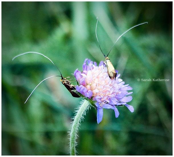insects, bugs, summer, garden, wildflower, prairie