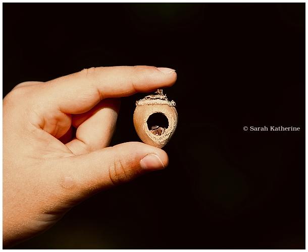 hand, fingers, hazelnut, summer