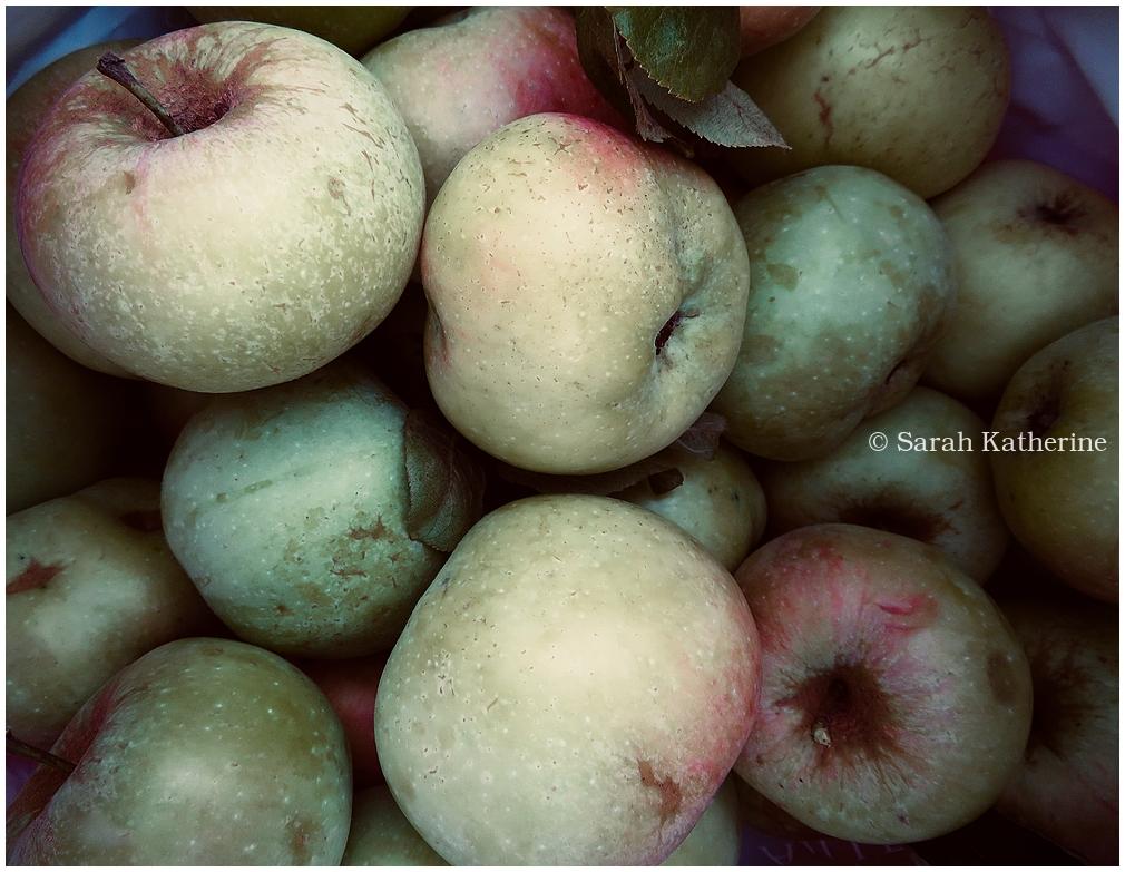 apples, autumn