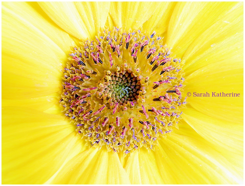 sunflower, autumn, inner