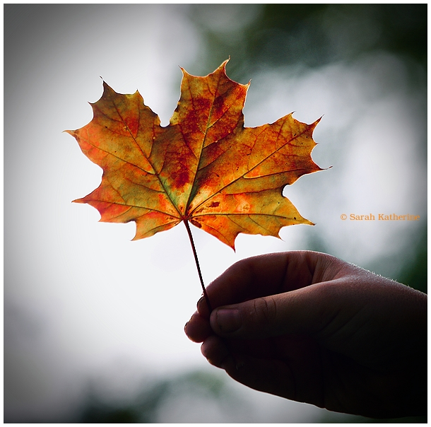 autumn, leaf, hand