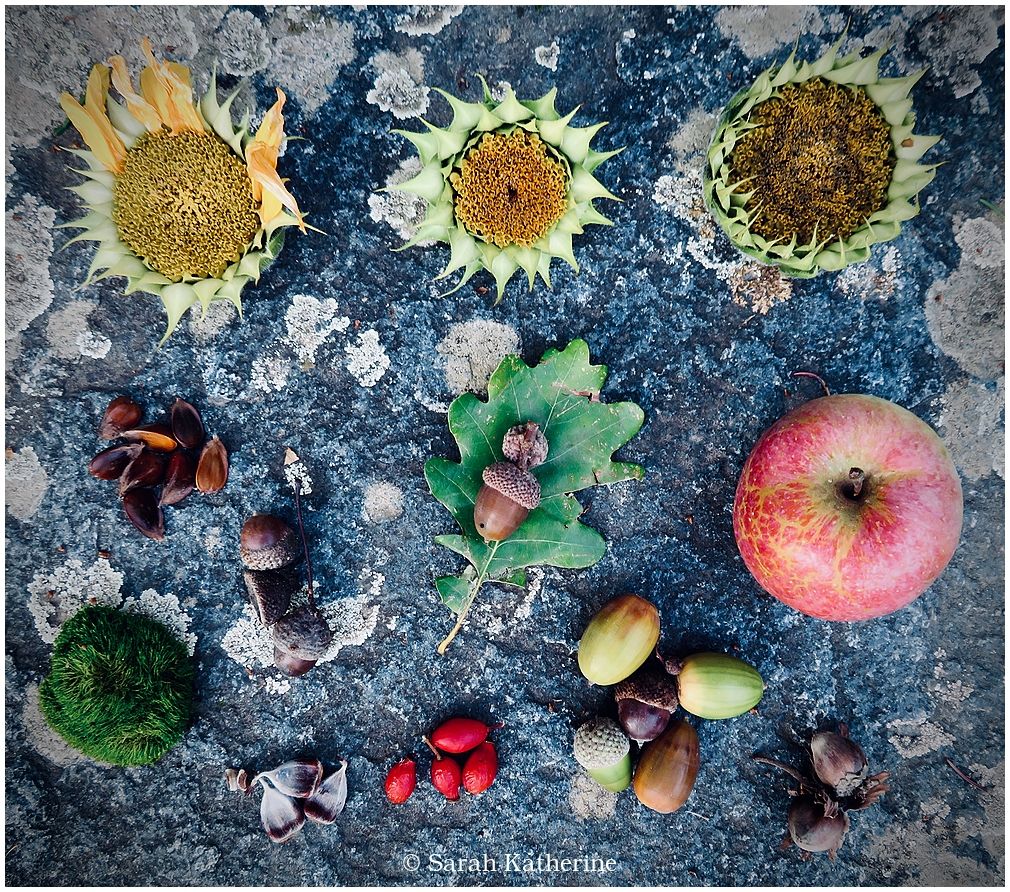 autumn, acorns, apple, sunflowers, chestnuts, rose