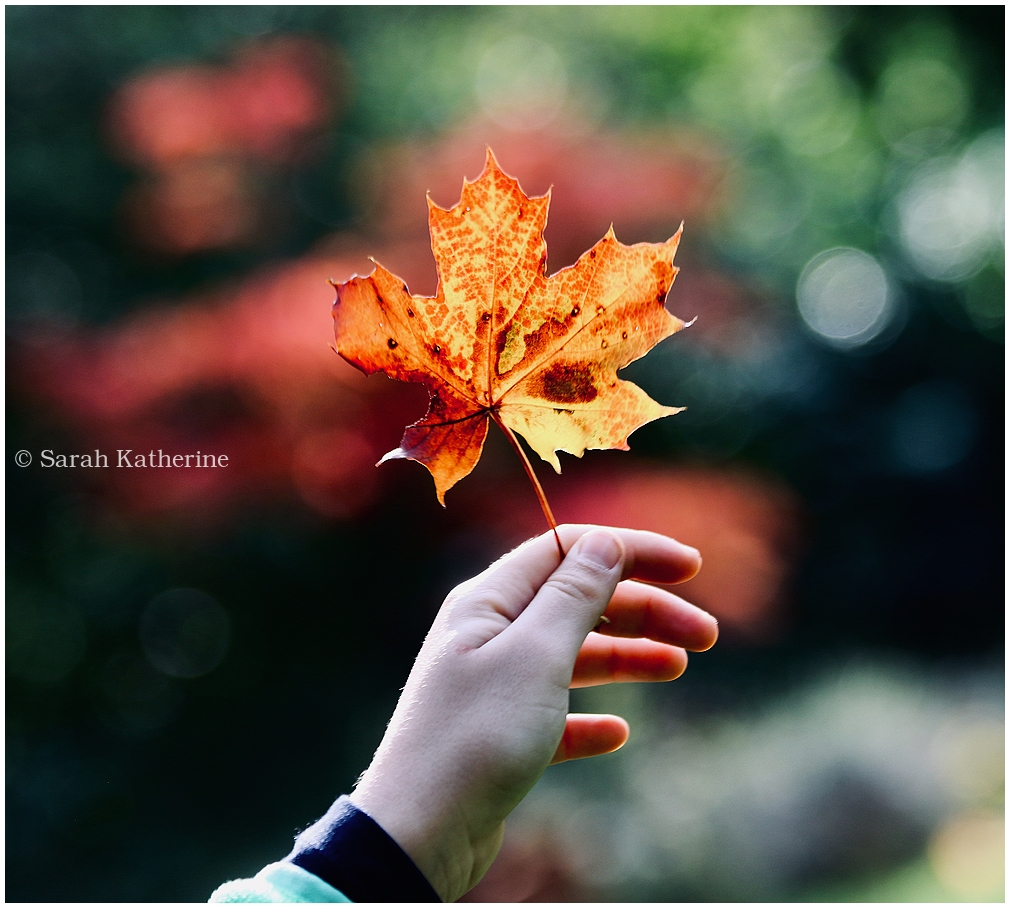 autumn, hand, leaf