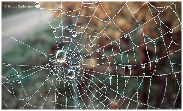 vines, autumn, web, droplets