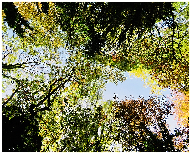 autumn, forest, elections, trees, heavens, thanks