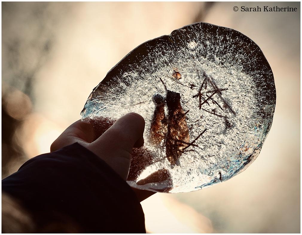 ice, frozen, autumn, seeds, hand, pine needles