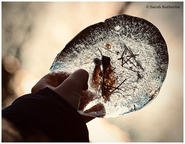ice, frozen, autumn, seeds, hand, pine needles