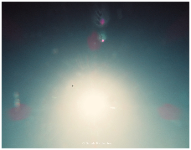 hawk, sky, light, sunlight, colours