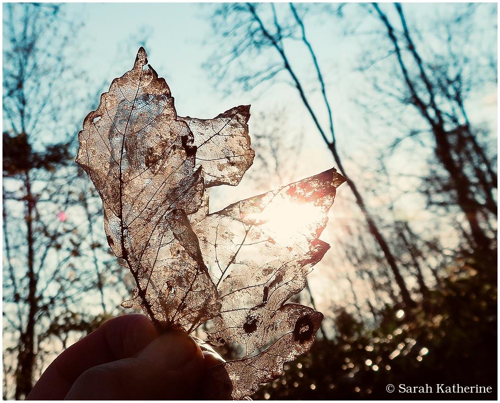 leaf, light, winter, gold, sun
