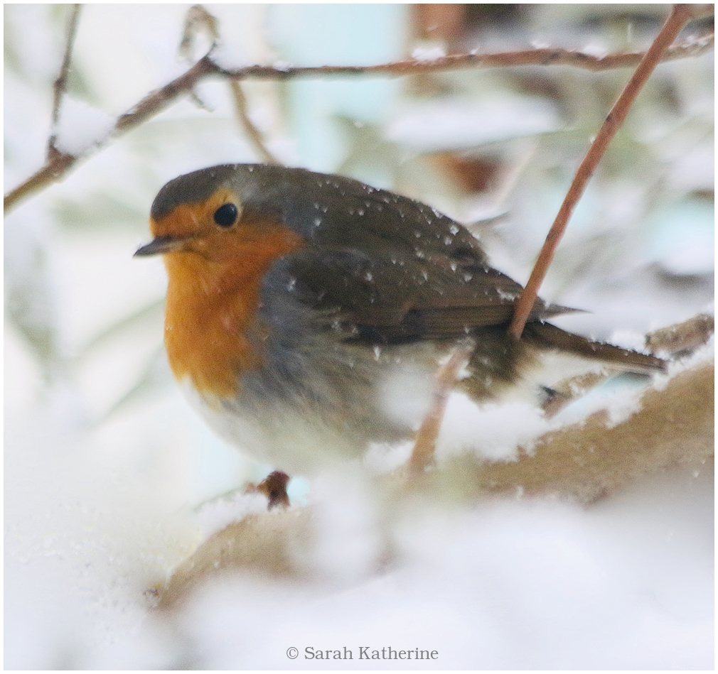robin, winter, tree, snow, window