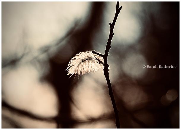 winter, light, feather