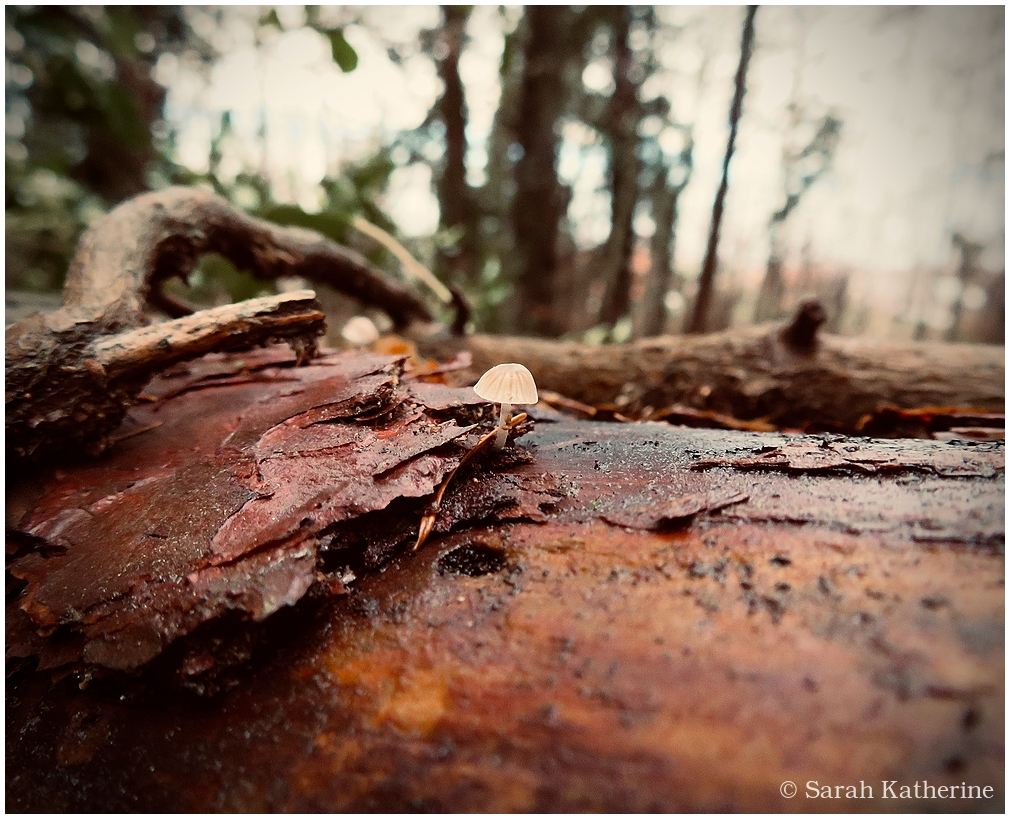 winter, mushroom, forest, wee, small