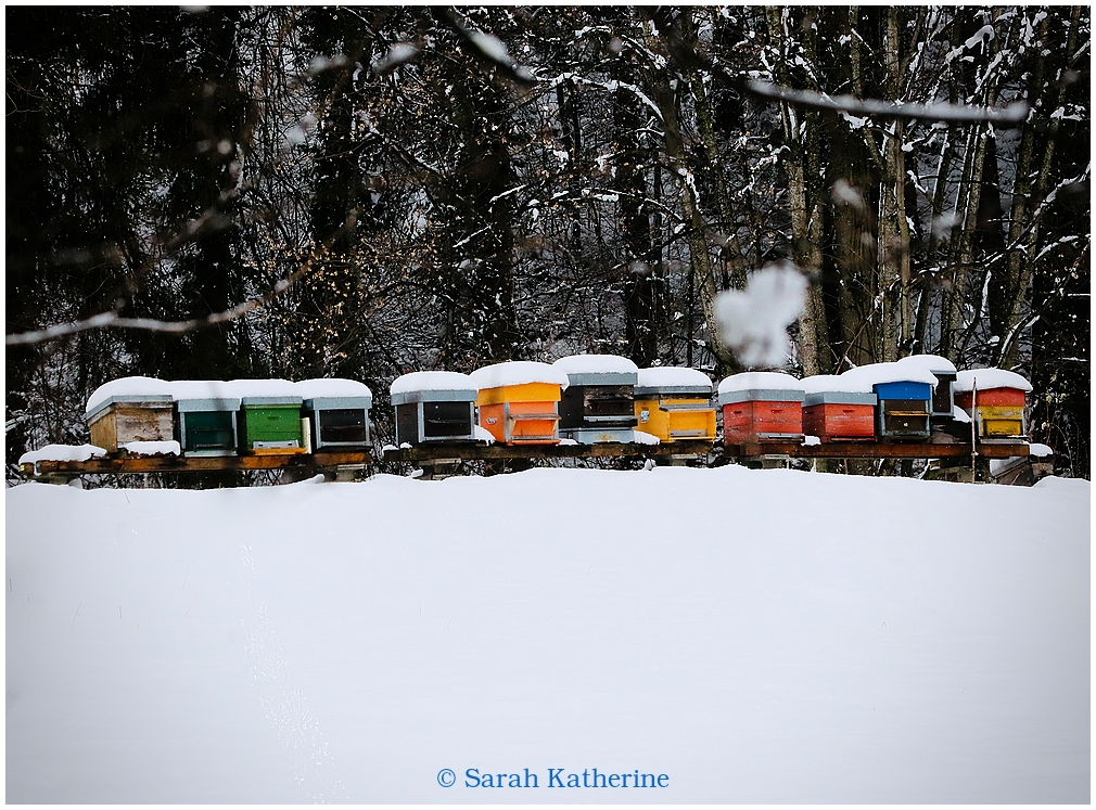 bees, hives, winter, snow, overwintering, forest