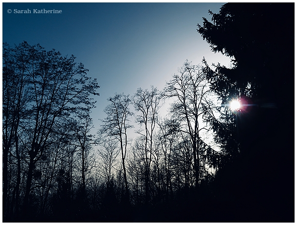 forest, dusk, winter