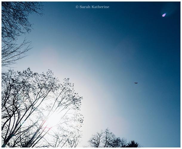 sky, blue, hawk, trees, forest, winter