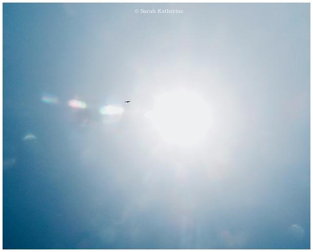 hawk, sun, sunlight, sunbeam, colours, sky