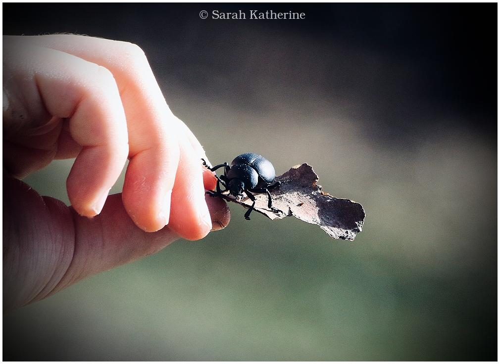 boy, hand, beetle, spring